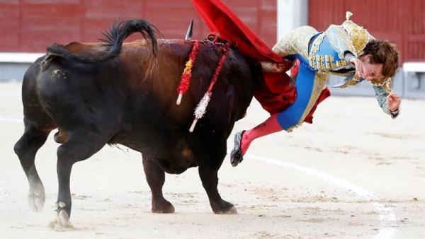 El torero Román, operado de urgencia dos veces por una cornada que le seccionó la arteria femoral