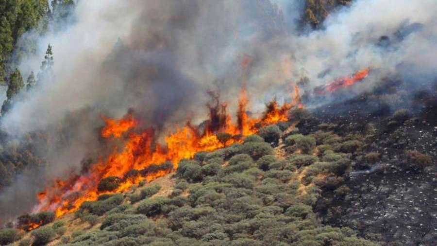 Unos 8.000 evacuados por el fuego de Gran Canaria
