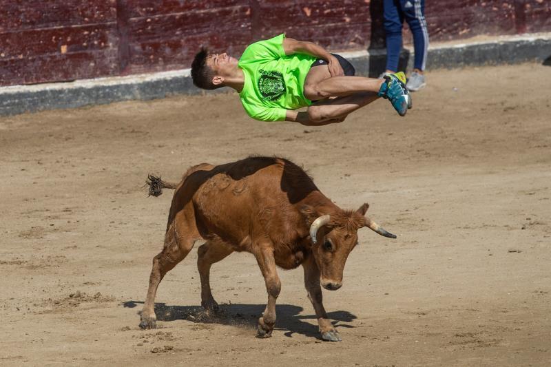 Casi toda España sigue dando toros en verano, aunque ahora a coste más bajo