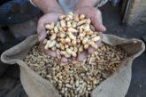 La CUN y el CHN, juntos en ensayo clínico contra alergia al cacahuete