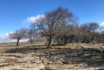 Enero fue un mes más cálido y seco de lo habitual en el norte de Navarra