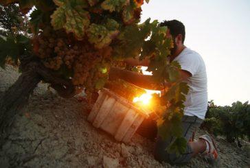 Vinoplacer apoya la recuperación del patrimonio vitivinícola español