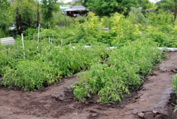 Sanidad permite el desplazamiento para el cuidado de los huertos y recolección de producciones agrícolas