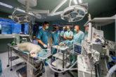 Coronavirus.- RNC19 un éxito en animales y primeras pruebas con pulmón artificial del respirador