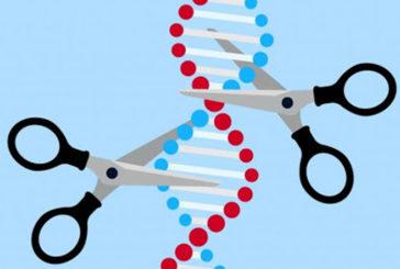 Investigadores del CSIC usarán la edición genética para destruir el corazón del coronavirus