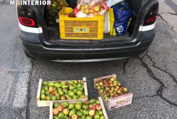 Interceptados en Lodosa (Navarra) 120 kg de alimentos sin la trazabilidad sanitaria