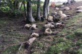 28 ovejas muertas por un rayo ayer en Sorogáin