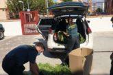 Incautados 9 kg de cogollos de marihuana en Pamplona