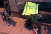 Detenidas en Corella dos personas por tráfico de drogas