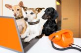 Las razas de perro más buscadas por los españoles en 2020
