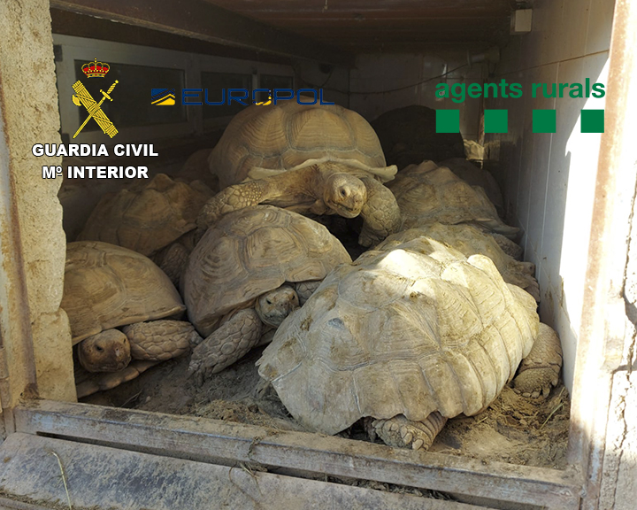 Desarticulan dos bandas criminales que traficaban con especies protegidas
