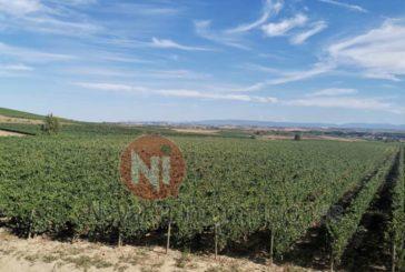 Convocadas las ayudas para la reestructuración y reconversión del viñedo en la campaña 2021-2022