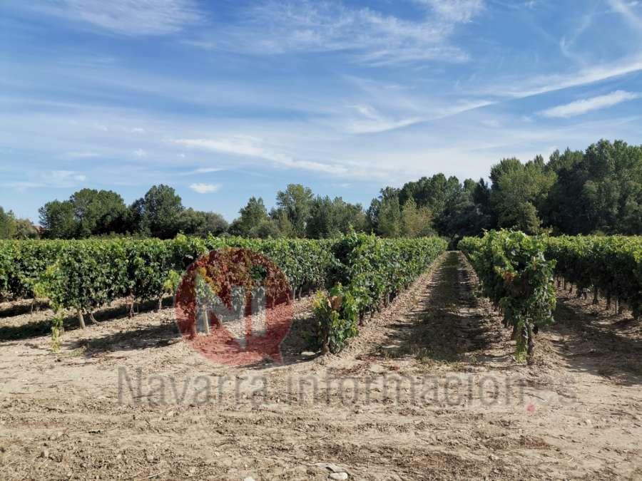Navarra consolida su Ruta del Vino con el reconocimiento nacional a su apuesta por el enoturismo