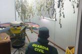 La Guardia Civil localiza una plantación de marihuana en la merindad de Estella
