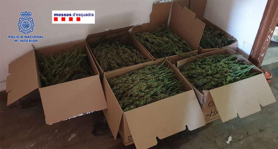 Desarticulada una de las mayores organizaciones criminales de origen chino dedicada al tráfico internacional de marihuana